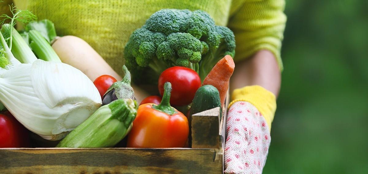 Bad Diet & Hair Loss: Effects of Nutrient Deficiencies - Hairborist